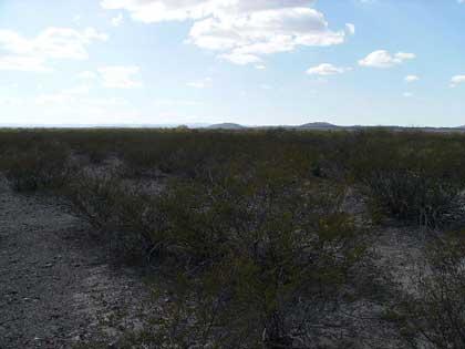 environmentpeyote