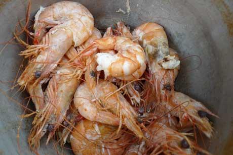 boiled_shrimp3