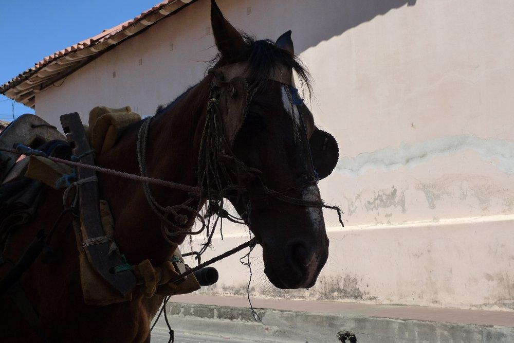 horse_nicaragua