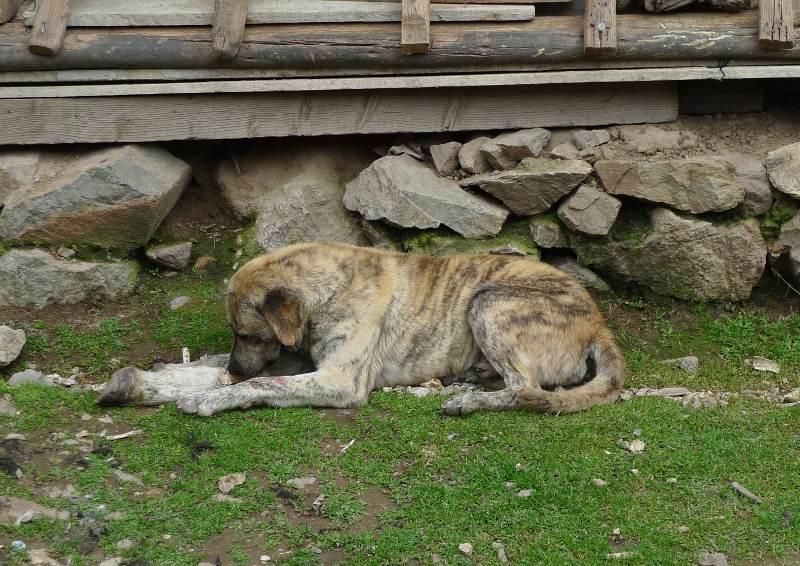 santa_catalina_peru_dog_bone